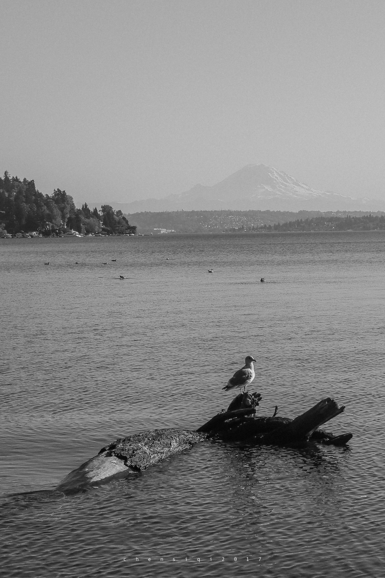 Seward Park | Washington | 2018